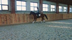 Vrouw het berijden paard snel op arena stock videobeelden