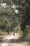 Vrouw in het bos in Tafi Atome in het Gebied van Volta in Ghana Stock Foto's