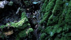 Vrouw in het bos verbergen wordt doen schrikken die stock footage