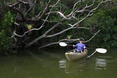 Vrouw het kayaking in het Nationale Park van Everglades, Florida stock foto's