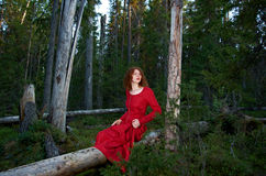 Vrouw het mystieke bos Stock Foto