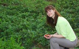 Vrouw het plukken aardbeien Stock Foto