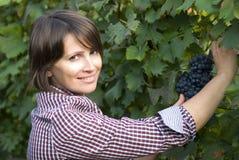 Vrouw het plukken druiven royalty-vrije stock fotografie