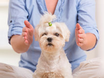 Vrouw het praktizeren reikitherapie Stock Foto