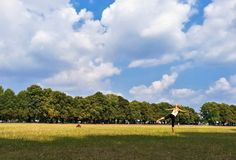 vrouw het praktizeren yoga openlucht in het park op een zonnige dag royalty-vrije stock afbeeldingen