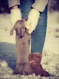Vrouw het spelen met hond tijdens de winter stock foto