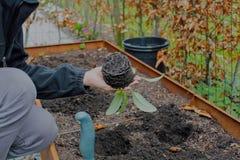 Vrouw het tuinieren Stock Fotografie