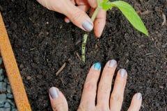 Vrouw het tuinieren Stock Foto