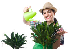 Vrouw het water geven installaties Stock Foto