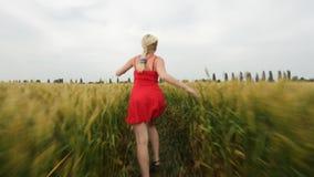 Vrouw met blondehaar in een rode kledingslooppas op het gebied met tarwe stock videobeelden