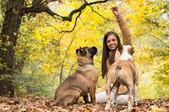 Vrouw met haar honden het spelen Stock Afbeeldingen