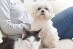 Vrouw met haar huisdier Royalty-vrije Stock Afbeelding