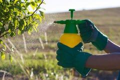 Vrouw met handschoenen bespuiten bladeren van fruitboom tegen plantenziekten en ongedierte stock foto