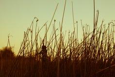 vrouw in Okavango-Delta, Botswana stock afbeeldingen