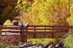 Vrouw op brug De herfstbomen en rivier stock foto's