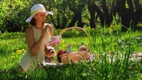 Vrouw op een picknick die koekjes eten uit de doos stock footage