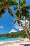 Vrouw op tropisch strand royalty-vrije stock foto