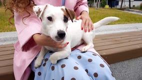 Vrouw samen met Hond in Park stock videobeelden