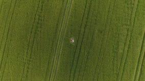 Vrouw twee met blondehaar in een rode en blauwe kleding ligt in het gebied met tarwe stock video