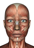 Vrouwelijk Anatomiegezicht stock illustratie