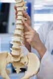Vrouwelijk de stekelmodel van de artsenholding Stock Foto's