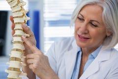 Vrouwelijk de stekelmodel van de artsenholding Royalty-vrije Stock Foto's