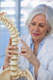 Vrouwelijk de stekelmodel van de artsenholding Royalty-vrije Stock Foto