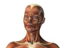Vrouwelijk gezicht dat spieren toont Stock Afbeelding
