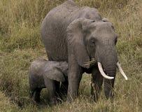 Vrouwelijk olifant en kalf stock afbeeldingen