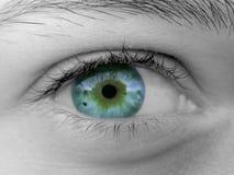 Vrouwelijk oog Stock Foto's