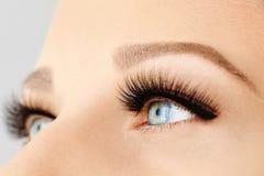 Vrouwelijk oog met extreme lange valse wimpers en zwarte voering Wimperuitbreidingen, samenstelling, schoonheidsmiddelen, schoonh royalty-vrije stock afbeelding