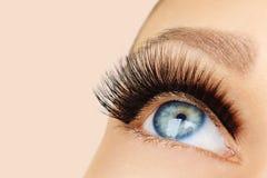 Vrouwelijk oog met extreme lange valse wimpers en zwarte voering Wimperuitbreidingen, samenstelling, schoonheidsmiddelen, schoonh royalty-vrije stock foto's
