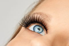 Vrouwelijk oog met extreme lange valse wimpers Wimperuitbreidingen, samenstelling, schoonheidsmiddelen, schoonheid royalty-vrije stock afbeelding