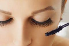 Vrouwelijk oog met extreme lange wimpers en borstel van mascara Samenstelling, schoonheidsmiddelen, schoonheid stock foto