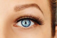 Vrouwelijk oog met lange valse wimpers Wimperuitbreidingen, samenstelling, schoonheidsmiddelen, schoonheid stock foto