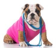 Vrouwelijk puppy Royalty-vrije Stock Afbeeldingen