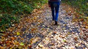 Vrouwelijke benen, die langs bosdieweg lopen, door gele gevallen bladeren in de herfst wordt uitgestrooid stock video