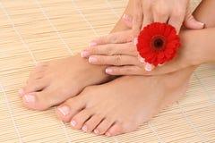 Vrouwelijke benen en handen Royalty-vrije Stock Afbeelding