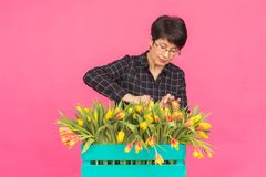 Vrouwelijke bloemist die op middelbare leeftijd blauwe houten doos van tulpen op roze achtergrond houden royalty-vrije stock afbeeldingen