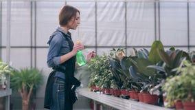 Vrouwelijke bloemist die voor bloemen in serre geven stock video