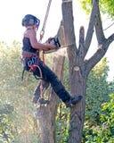 Vrouwelijke boomchirurg omhoog een boom Royalty-vrije Stock Afbeeldingen