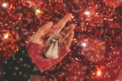 Vrouwelijke de vakantiedecoratie van de handholding met kleine Kerstboom Stock Afbeeldingen