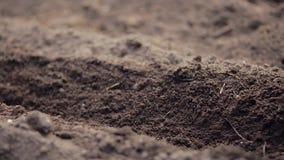 Vrouwelijke de wortelzaden van landbouwersPlanting stock videobeelden