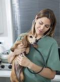Vrouwelijke Dierenarts die Tekkel met Stethoscoop onderzoeken stock afbeelding