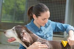 Vrouwelijke dierenarts het strijken hond bij dierlijke schuilplaats royalty-vrije stock foto