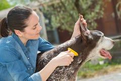 Vrouwelijke dierenarts het strijken hond bij dierlijke schuilplaats stock foto's