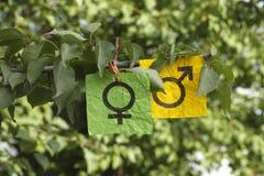 Vrouwelijke en mannelijke geslachtssymbolen die op een boom hangen Stock Foto
