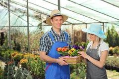 Vrouwelijke en mannelijke tuinlieden met een mandhoogtepunt van bloempotten in a Royalty-vrije Stock Fotografie