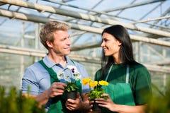 Vrouwelijke en mannelijke tuinman in markttuin Royalty-vrije Stock Foto's