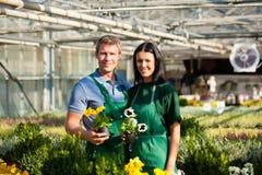 Vrouwelijke en mannelijke tuinman in markttuin of kinderdagverblijf Stock Foto's
